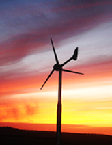 conservation grazing - wind turbine