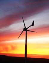 conservation grazing - wind turbine